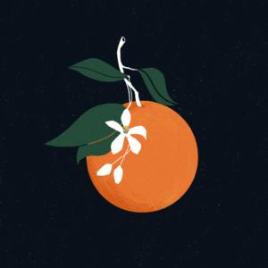 Illustrazione di arancia e zagara